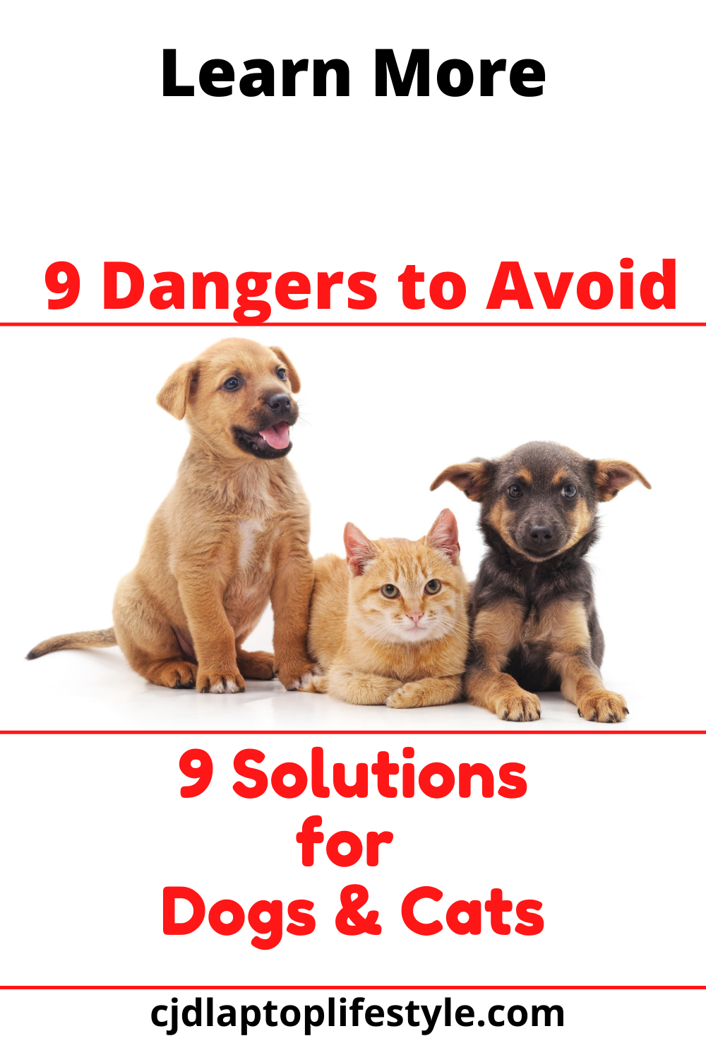 Avoid these 9 Everyday Hazards for Your Cats and Dogs